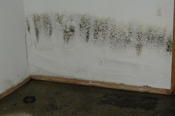 black-mold-wet-basement